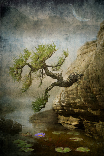 Textured-Composite-Photograph-Bonsai-on-Rocks-at-Night-Moon-Stars