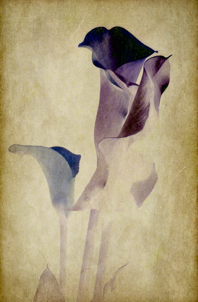 Textured-Photograph-Portrait-Calla-Lily-Negative
