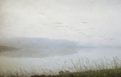 Textured-Photograph-Foggy-Water-Flying-Birds