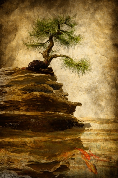 Composite-Textured-Photograph-Bonsai-on-Rocks