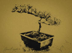 Photo of Bonsai with Mezzotint Effect