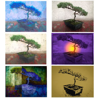 Grid of six bonsai iPhone images with various digital treatments